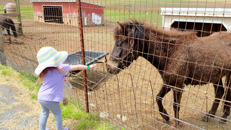 Farms with Petting Zoo Berks County
