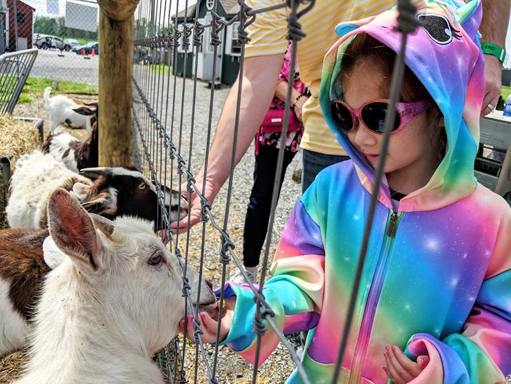 Feeding Goats Oley Petting Zoo